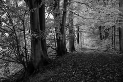 *** (pszcz9) Tags: przyroda nature natura ścieżka path las forest forestimages drzewo tree pejzaż landscape beautifulearth sony a77 bw blackandwhite monochrome czarnobiałe jesień autumn fall
