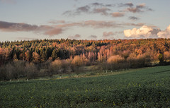 autumn (tehroester) Tags: autumn fall colours forest trees sunset golden hour sky meadow sony alpha a7 manual vintage glass canon fd 50mm clouds