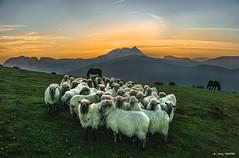 Artaldea Saibin (Jabi Artaraz) Tags: jabiartaraz jartaraz zb euskoflickr artaldea rebaño sheep oveja saibi urkiola anboto nature naturesfinest