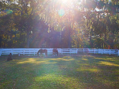 Friends turned out to graze