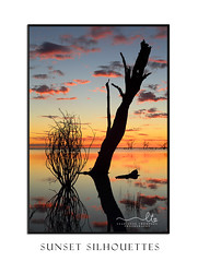 Sunset and silhouettes over the lake (sugarbellaleah) Tags: sunset outback australia pretty silhouette water lake oasis tree bush plant dead contrast vibrant colour outdoors portrait rural countryside place camping travel tourism menindee nsw awesome spectacular clouds weather tranquil serene calm reflections sundown scenery vista