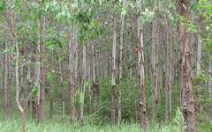 - Sweeneys 534 Phillips Swamp Road, Busbys Flat NSW