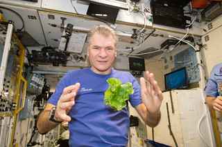 Space lettuce!