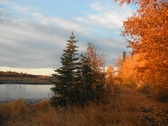 Morning Glow ... (Mr. Happy Face - Peace :)) Tags: fall autumn trees gold leaves river albertabound cans2s canada naturelover hiking bliss art2017 nature blueskies