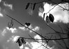 The winter above my head 見上げれば、冬 (Sign-Z) Tags: nikon d7000 leaf afsdxnikkor1680mmf284eedvr winter monochrome bw モノクローム 白黒 冬 木 葉