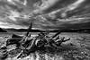 The monster (mirkoforza) Tags: monster lake lago mostro spiaggia wood cloud clouds beack hdr nikon d700 samyang 14mm 13 spiaggiato bw black white blackwhite