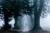 Foggy day (b2g.focus) Tags: fog mist brume brouillard trees forest wood people silhouette autumne automne ambiance mélancolie cinématique drama ngc ngg