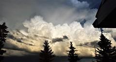 Billowing clouds (darletts56) Tags: billowing clouds white sky tree tops saskatchewan canada prairies afternoon