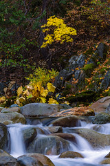 North Yuba River Cascades and Fall Color (sierrasylvan) Tags: adobe adobebridgecc adobelightroomcc adobephotoshopcc canon canoneos6d canonef70200mmf28lisllusmlens canonextenderef2xlll sierranevadafoothills foothills mountains sierranevadamountains sierrarange california downieville sierracounty tahoenationalforest indianrhubarb darmerapeltata plants lichen moss river yubariver northyubariver trees maple bigleafmaple tripod manfrotto manfrotto190xprobtripod manfrottobasicpantilthead vello freewavepluswirelessremotecontrolshutterrelease autumncolors2017 autumn black blue cascades fall fallcolors2017 landscape forest gray green leaves autumnleaves nature orange outdoor red rocks shore water stream white yellow