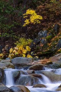 North Yuba River Cascades and Fall Color
