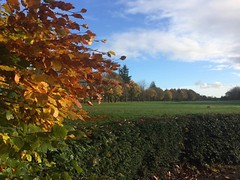 Colours of Autumn (markshephard800) Tags: course golf paisley barshaw renfrewhsire hedge autumn autumnal fall colours colors couleurs farben leaves beech tree trees sunlit sunlight