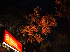 20171110-031 (sulamith.sallmann) Tags: pflanzen abends autumn baum berlin deutschland germany herbst kindermuseumlabyrinth mitte nacht nachtaufnahme nachts night nightshot osloerstrase pflanze plants schild sign soldinerkiez tree wedding deu sulamithsallmann