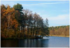 DSC_1933 (FMAG) Tags: 2017 żabieniec zalesie jesien