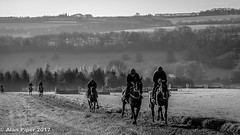 On the gallops (PapaPiper) Tags: england united gloucestershire autumn uk unitedkingdom horses horseracing racehorse