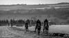 On the gallops (PapaPiper) Tags: england united gloucestershire autumn uk unitedkingdom horses horseracing racehorse greatphotographers