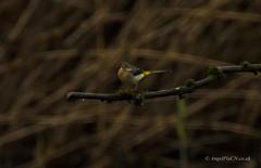 _DSC1982 (AngelPixCn) Tags: angepixcn birds farm feeding green heron jay nikond7100 pond wings yellow cardiff wales unitedkingdom gb