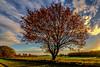 Herbstbaum (st.weber71) Tags: nikon nrw niederrhein natur deutschland d850 himmel hünxe wolken outdoor tamron tamron1530f28 herbst herbstfarben feld farben felder wiese wiesen germany bäume bunt baum laub sonne sonnenschein sonnenlicht landscape landschaft