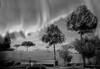 rainy day (♣Cleide@.♣ mostly off) Tags: © ♣cleide♣ brazil 2017 ps6 photo art digital monochrome bw landscape artdigital exotic netartii atree sotn