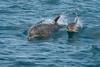 dolphins (leonardo manetti) Tags: animale mammifero acqua