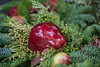 Apple Sweet. (Omygodtom) Tags: sammysflowers apple asia shore contrast composition lines green red nikon nikkor d7100 bokeh nikon70300mmvrlens street city usgs urbunnature