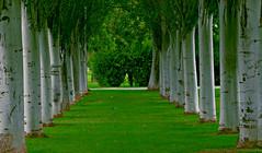 Efecto pasillo (portalealba) Tags: zaragoza zaragozaparque aragon españa spain portalealba pentax pentaxk50 1001nights 1001nightsmagiccity