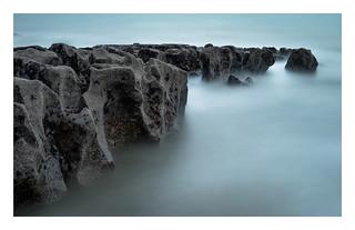 Western Lakes  - Sea Vertebrae