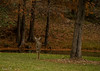 Guardian of the meadow (Irina1010) Tags: deer pond forest trees meadow guardian animal nature autumn canon berry coth5