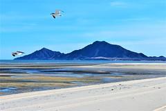 Sand flats (thomasgorman1) Tags: sand beach birds sea tide lowtide mexico baja nikon view scenic flats sandy outdoors nature seagulls gulls mountains hills sky bluesky tracks
