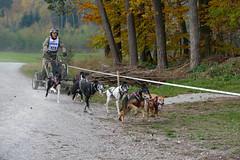 Schlittenhunderennen_166