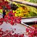 Memories of Heidelberg (5igrid) Tags: heidelberg autumn trees redleaves red green water reflections castlegrounds people redpullover waterbasin