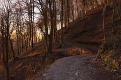 Alba nella Faggeta (emanuel.foglia) Tags: bosco faggio faggeta autunno escursione trekking nikon d7200 sigma1835 art rosso colori autunnale montagna fuipiano valleimagna bergamo lombardia italy foglie luce alba