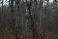 (Pentastar In The Style Of Demons) Tags: canon 5dmk2 ef24105f4 forest mountain nature landscape autumn cold trees