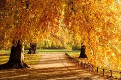 Autumn at its best (christopherbischof) Tags: leipzig park johannapark bäume laub laubfärbung herbst autumn foliage landschaft landscape fujifilm fujifilmxt2 xf1855mm xf1855mmf284rlmois deutschland