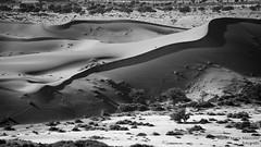 Desert on the go BW (BIG format) (marcomariamarcolini) Tags: desert surreal strange odd conceptual moon moony bw blackandwhite blackwhite blancnoir bianconero blanconegro mono monocromo monochrome digital nikon d810 marcomariamarcolini nikkor fantasy sand sabbia namibia sossusvlei sanddunes dunes dune trees nature landscape paesaggio panoramic wideview nikkor70200f4vr