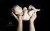 Baby-fotograf-dusseldorf-110 (AndiWerner.com) Tags: baby kind familie fotofotografie fotograf düsseldorf pempelfort zoopark zoo düsseltal fotoshooting andi werner fotografin nikon nps top beste neugeboren newborn mutter vater schwanger schwangerschaft belly bellybauch bauch