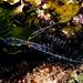 JRR_2781 - Shrimp