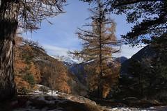 Mont Chemin (bulbocode909) Tags: valais suisse montchemin montagnes nature forêts arbres automne mélèzes troncs nuages paysages orange bleu vert neige