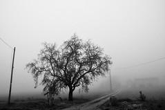 (Martin PEREZ 68) Tags: arbre brouillard fog campagne campo countryside paysage paisage landscape noiretblanc nb bw blackandwhite
