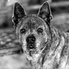 Cassidy18Nov20174-Edit.jpg (fredstrobel) Tags: dogs pawsatanta phototype atlanta blackandwhite usa animals ga pets places pawsdogs decatur georgia unitedstates us