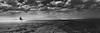 The amazon (alestaleiro) Tags: cabalgata cavalgada horse caballo horseride bw bianconero monochrome dune desert desierto arenas areias dessert cinematic jericoacoara brasil brazil ceará nordeste landscape amazon jinete mar playa praia spiagia alestaleiro alejandroolivera água wasser water litoral agua