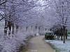 Silence (Danilo Agnaioli) Tags: perugia umbria neve paesaggi inverno alberi viali canon6d