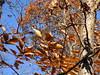 Thanksgiving 2017 (Peter Musolino) Tags: rons virginia