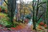 Birnam Glen Path (eric robb niven) Tags: ericrobbniven scotland dunkeld birnam perthshire cycling