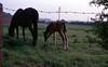 img006 (foundin_a_attic) Tags: horse 1970s hourse