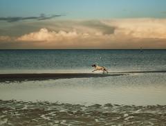 Wish you a nice start to the Advent weekend! (Ostseeleuchte) Tags: happyweekend schöneswochenende dezember2017 1advent adventswochenende ostsee balticsea sky clouds wolken hund seehund himmel
