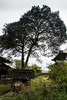 Todai-ji Gardens (p4r4n01d) Tags: japan nara