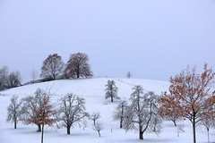 Winterdream (jennichristine801) Tags: first snow winter dream winterdream sky himmel
