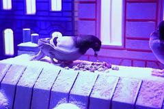 Vive Noel (Shooting photo à petit prix) Tags: noel galerielafayette paris vivenoel france couleurs oiseaux love coeur sapin bonbons cadeaux spots sapins bleu rouge blanc peluche roue oursblanc toits pigeons colombes découverte aventure