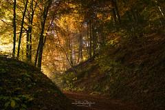 Herbst / Autumn (Claudia Bacher Photography) Tags: herbst autumn baum tree wald forest natur nature outdoor suisse schweiz switzerland sonya7r