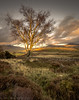 The Fire Tree (tdove77) Tags: ngc leefilters landscapes mirrorless microfourthirds gh3 panasonic lumix cumbria lakedistrict northlakes lonetree goldenhour keswick wallacrag